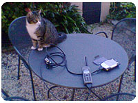 cat and thuraya telephone on the table